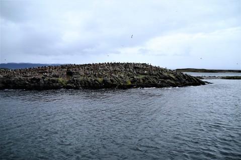 cormorani.jpg